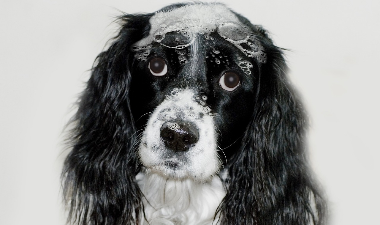 Scallywags Dog Grooming-Services